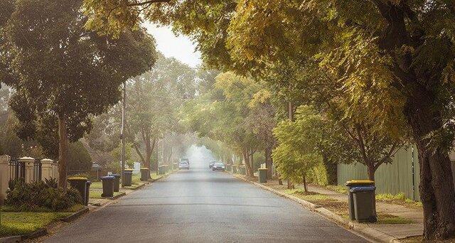 آیا کاشت درخت در شهرها در مقابله با تغییرات آب وهوایی کافی است؟