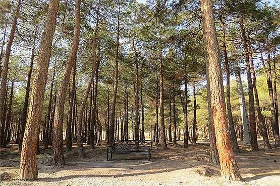 اسامی 4 بوستان جنگلی تهران که تا 15 اردیبهشت تعطیل است