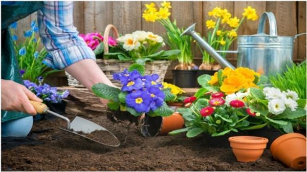 ده گل بهاری که باید در زمستان کاشته شوند