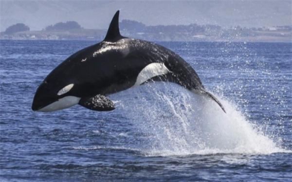 حقایق شگفت انگیز درباره نهنگ ها