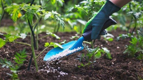هیچ مسئله ای برای تامین کود مورد نیاز کشت پاییزه نداریم